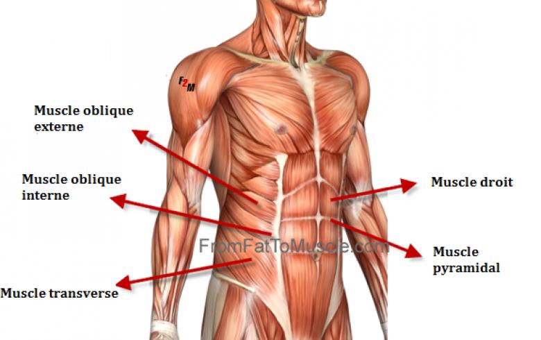 20 exercices pour muscler ses différents abdominaux - Les Éclaireuses