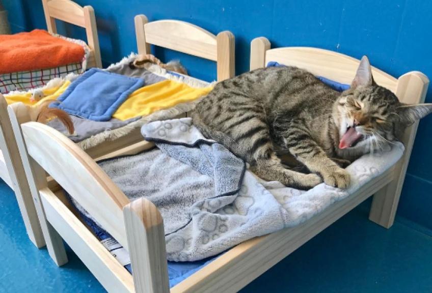 #Cuteness : Ikea offre des minis lits de poupée pour les chats abandonnés !