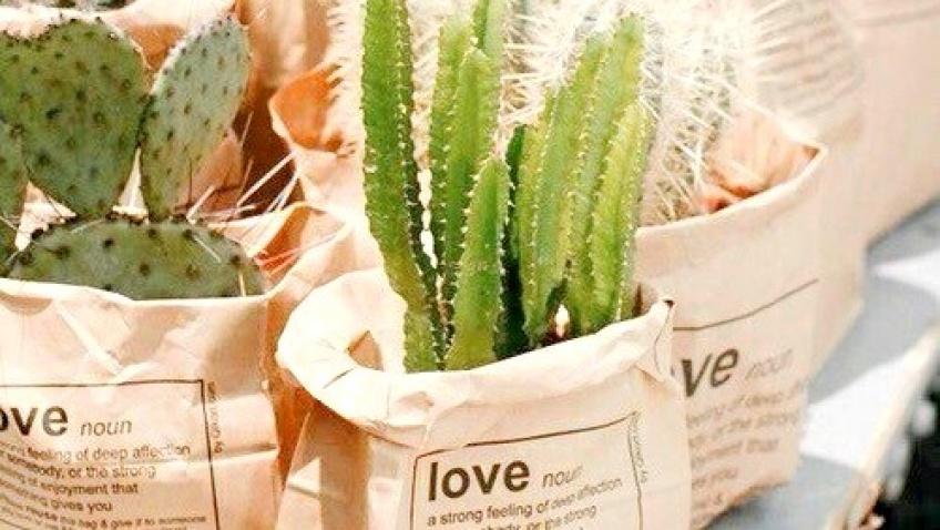 5 plantes immortelles pour toutes celles qui n'aiment pas jardiner !