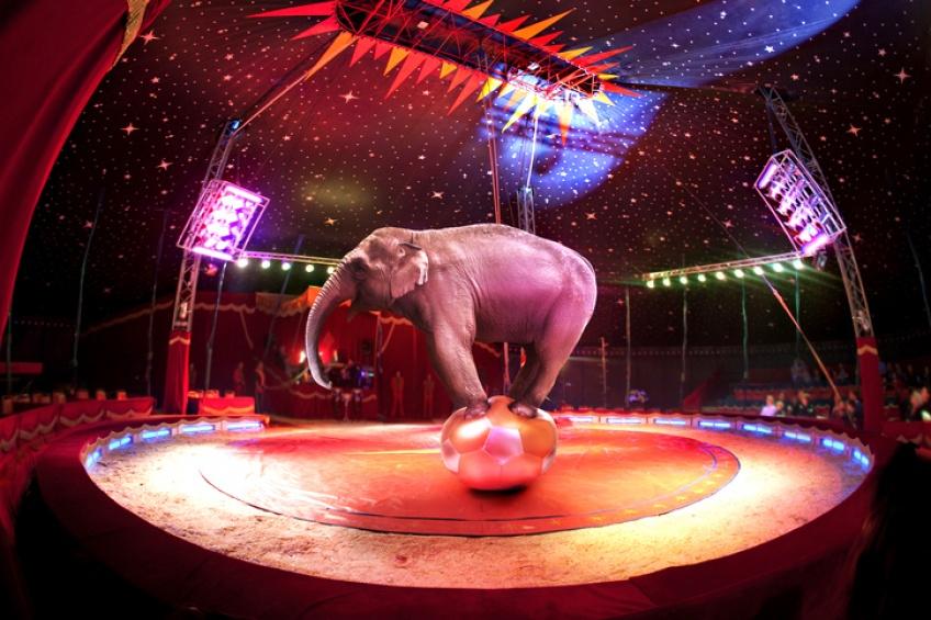 Les animaux sauvages n'auront désormais plus leur place dans les cirques à Rennes !