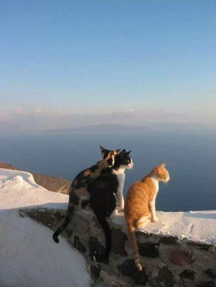 Job de rêve: être payée pour vous occuper de chats sur une île grecque, ça vous tente?