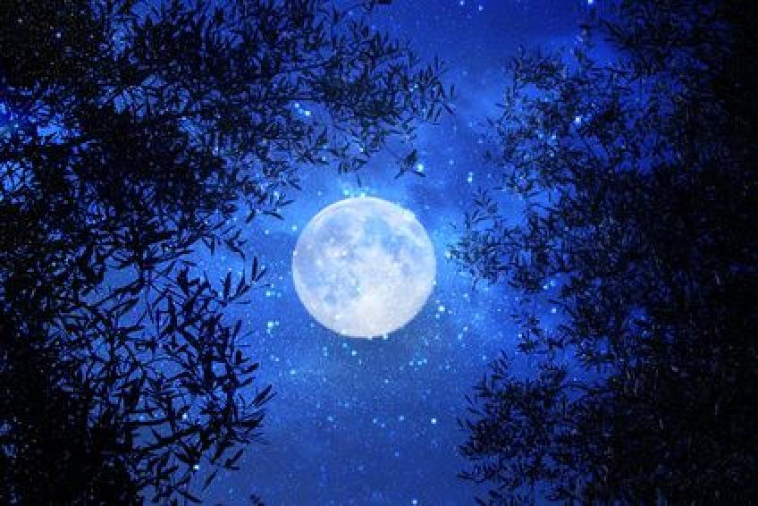 Un milliardaire japonais sera le premier touriste à aller autour de la Lune !