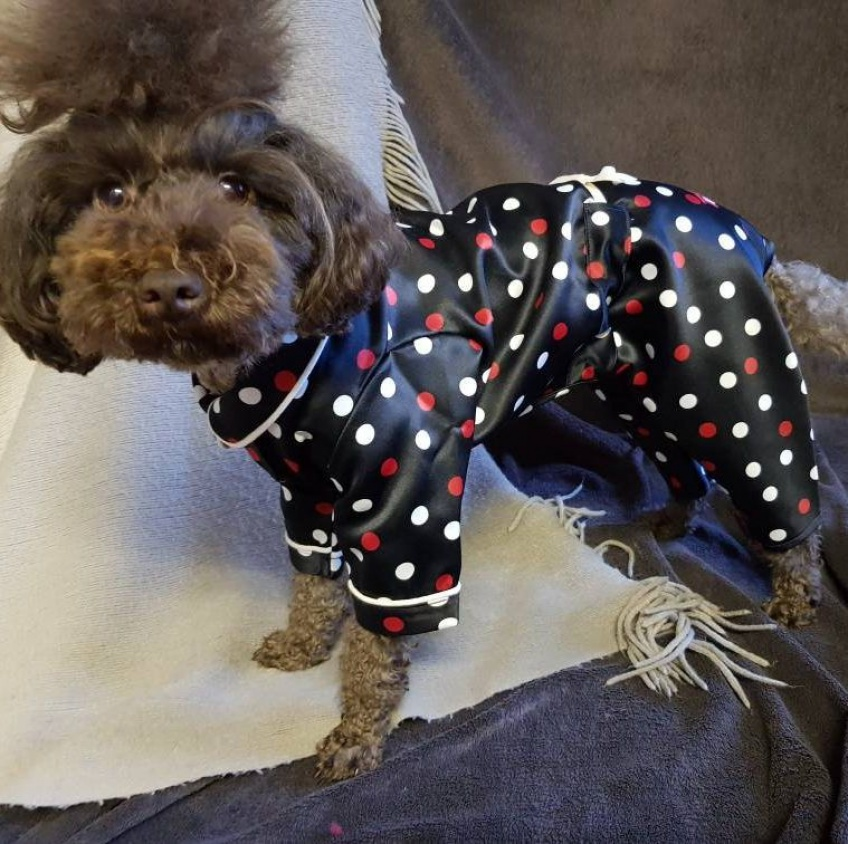 Il existe des peignoirs coordonnés pour vous et votre chien et il vous en faut un !