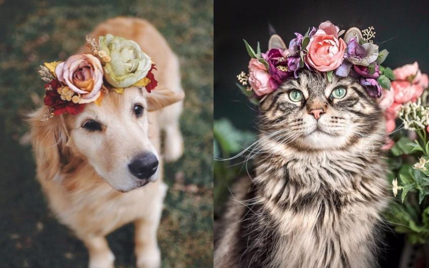 Cette femme confectionne des couronnes de fleurs pour les animaux !
