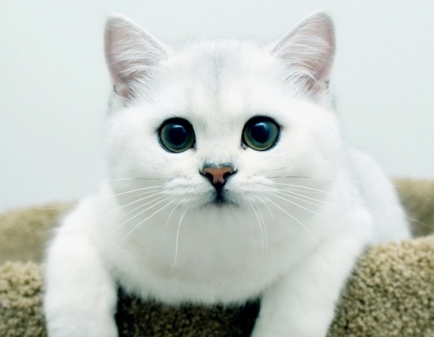 Les personnes qui aiment les chats seraient plus intelligentes que celles qui aiment les chiens