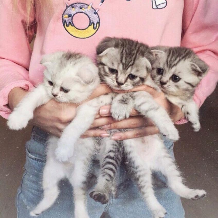 25 idées cadeaux pour les filles qui adorent les chats
