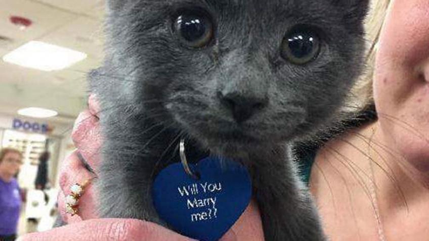 #Instant douceur : Il fait sa demande en mariage avec un chaton !