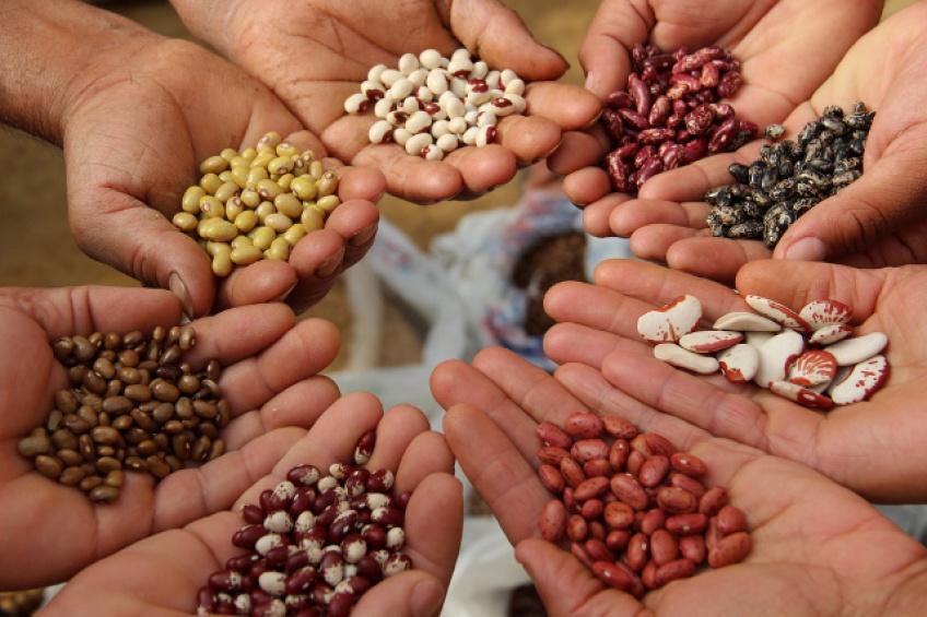 10 graines à introduire dans vos plats