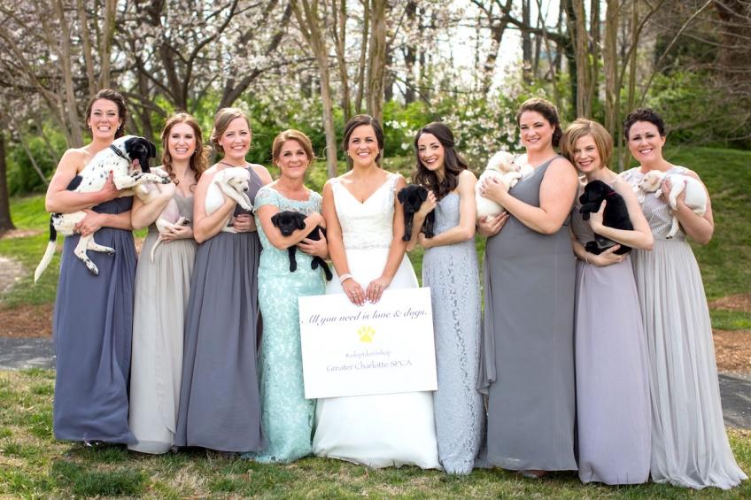 Cette jeune mariée a réalisé son shooting photo pré-nuptial accompagnée de demoiselles d'honneur et de petits chiens