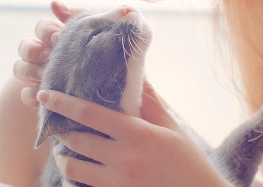 Câlineur de chat : Le job le plus doux au monde !