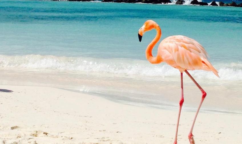 Découvrez l'île où l'on nage avec des flamants roses!