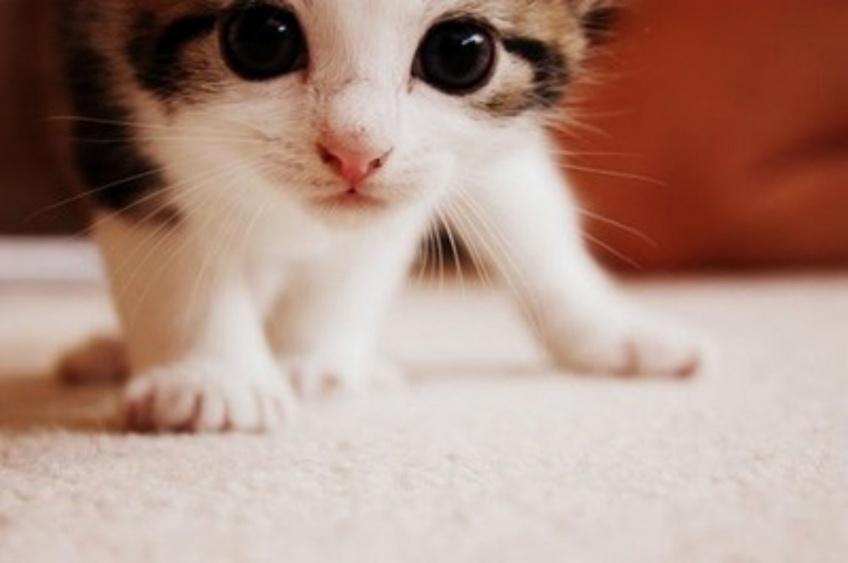 Les chatons seraient peut-être la clef de la durée d'un couple !