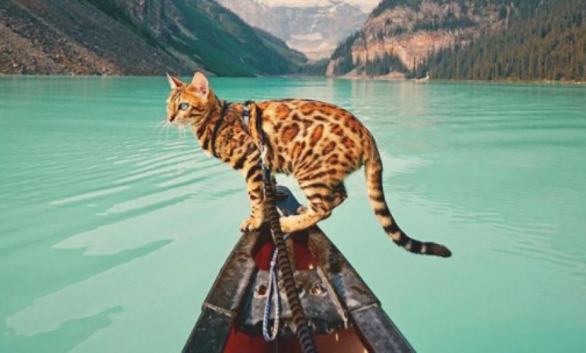 On vous présente Suki, le chat bengal qui voyage plus que vous !