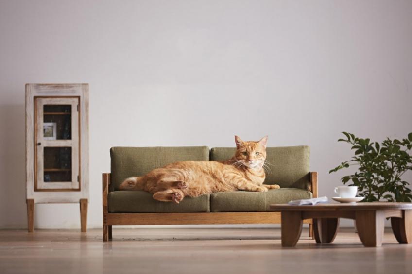 Vous allez craquer pour cette collection de meubles pour chats !