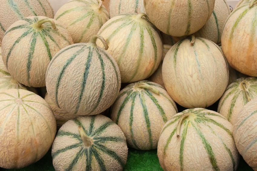 3 morts et plusieurs personnes blessées après avoir mangé du melon !