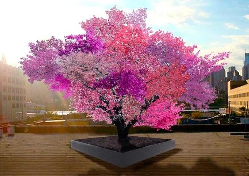 Il joue avec la nature et obtient un arbre à quarante variétés de fruits différents !