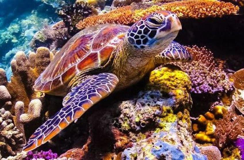 300 tortues ont été retrouvées mortes dans le Pacifique au Mexique !