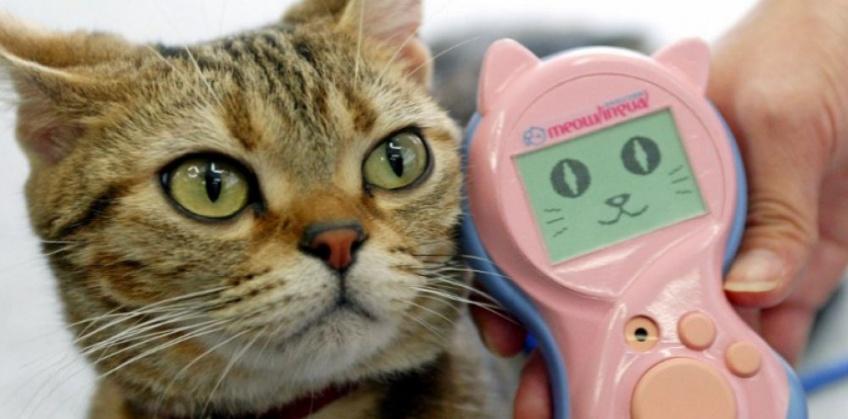 Il existe un outil de traduction pour chat pour enfin discuter avec votre animal préféré