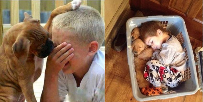 Ces photos qui prouvent que les enfants ne peuvent pas vivre sans animaux !
