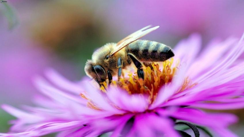 La plateforme de vidéos Pornhub veut sauver les abeilles !