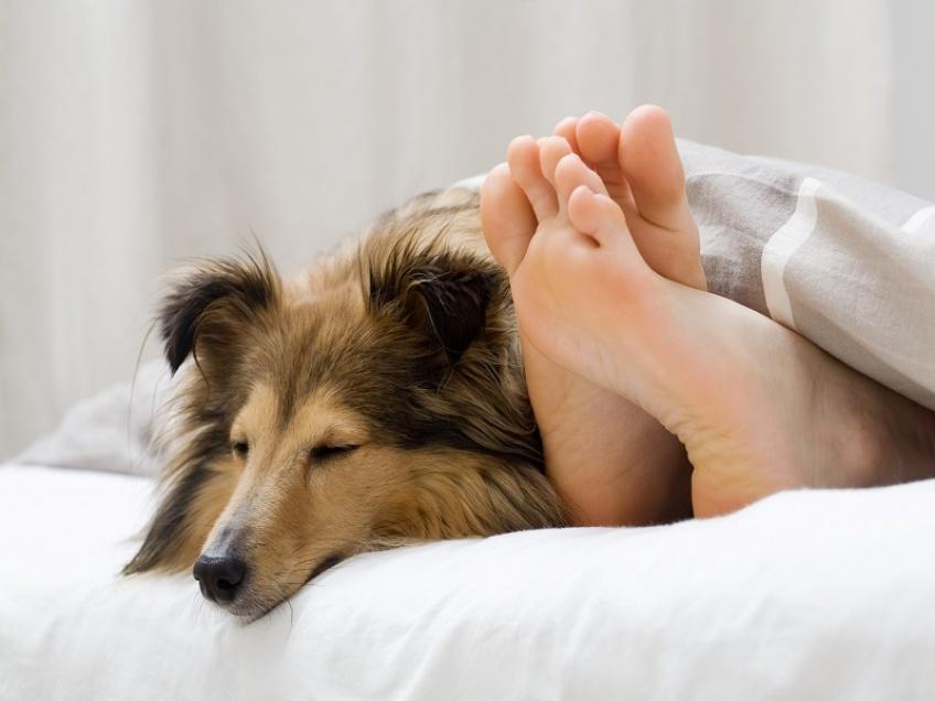 Pourquoi dormir avec un chien est mieux que dormir avec un être humain !