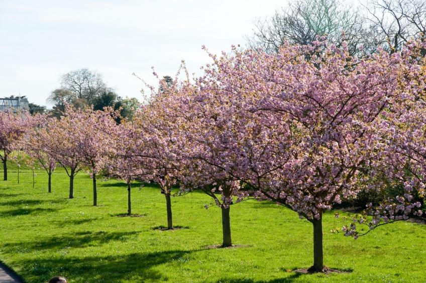 Herbal Essences certifiée par The Royal Botanic Gardens Kew !