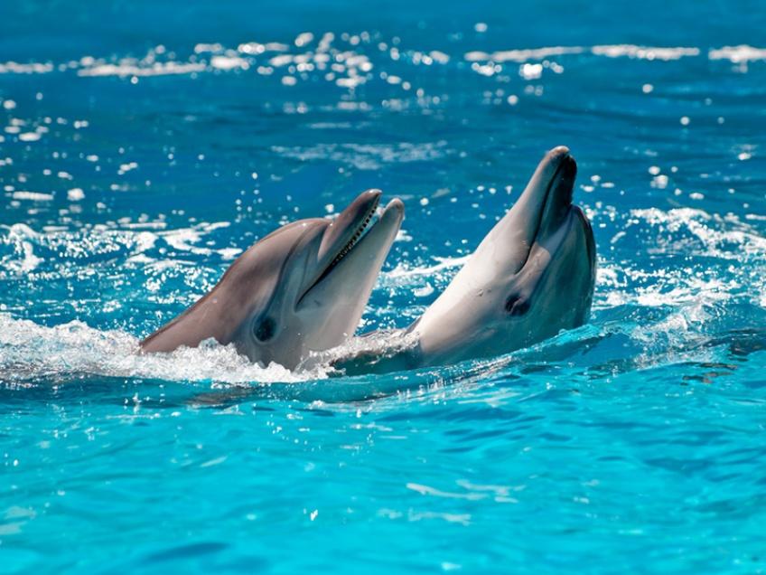 baleines dauphins