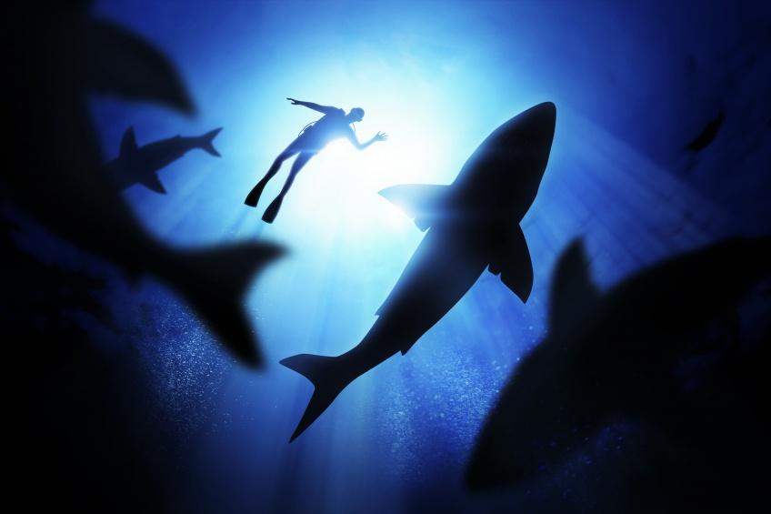 Un requin préhistorique attaque un sous-marin, cette espèce existait avant les dinosaures !