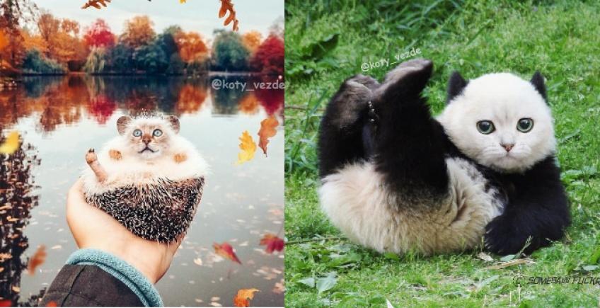 Un artiste imagine un monde où tous les animaux seraient des chats !