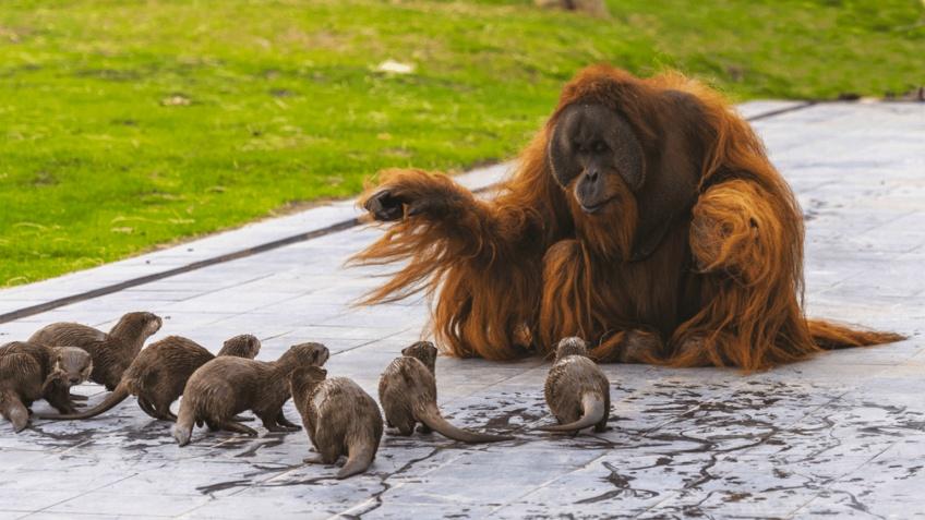 Un zoo de Belgique fait cohabiter ses animaux pour leur bien-être et photographie ces drôles d'amitiés