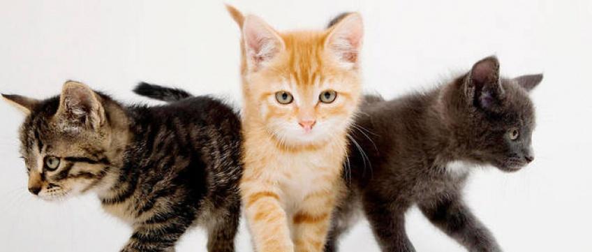 Peace Island : le jeu vidéo qui vous permet d'incarner la vie d'un chat