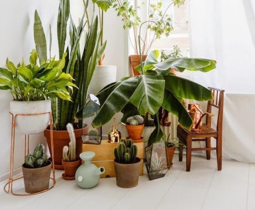 Déco : les plantes à adopter pour illuminer son nid douillet !