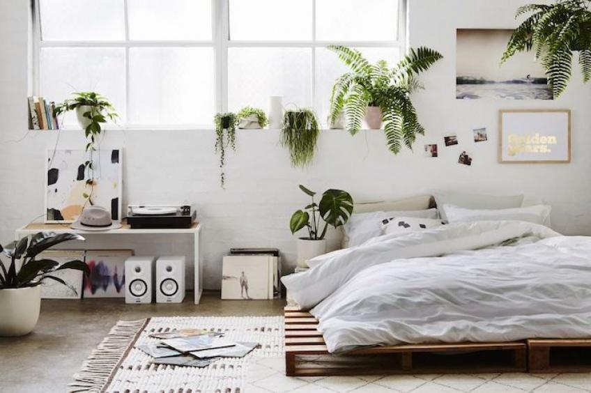 Déco : Quelles plantes adopter pour votre chambre ?