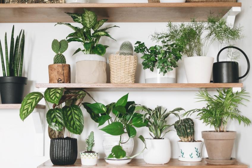 Les plantes parfaites pour celles qui n'ont pas la main verte !