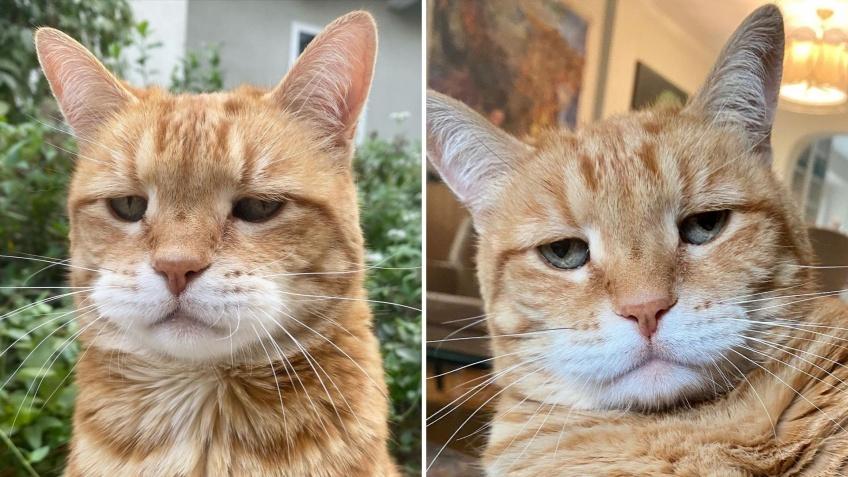 Marley, le nouveau chat grincheux qui nous donne le sourire !