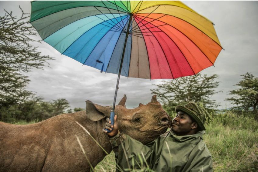 Découvrez les incroyables photographies du BigPicture Natural World 2020