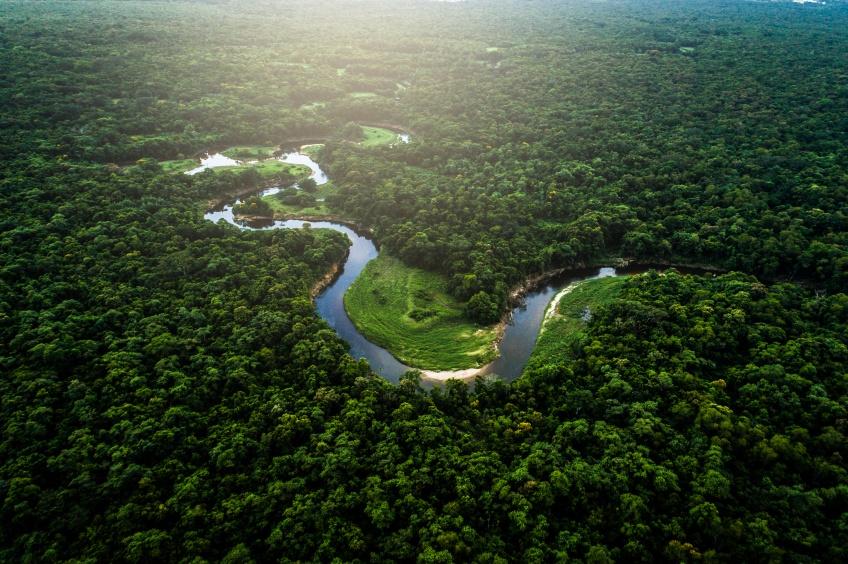 Un couple brésilien a passé 20 ans à planter une forêt entière