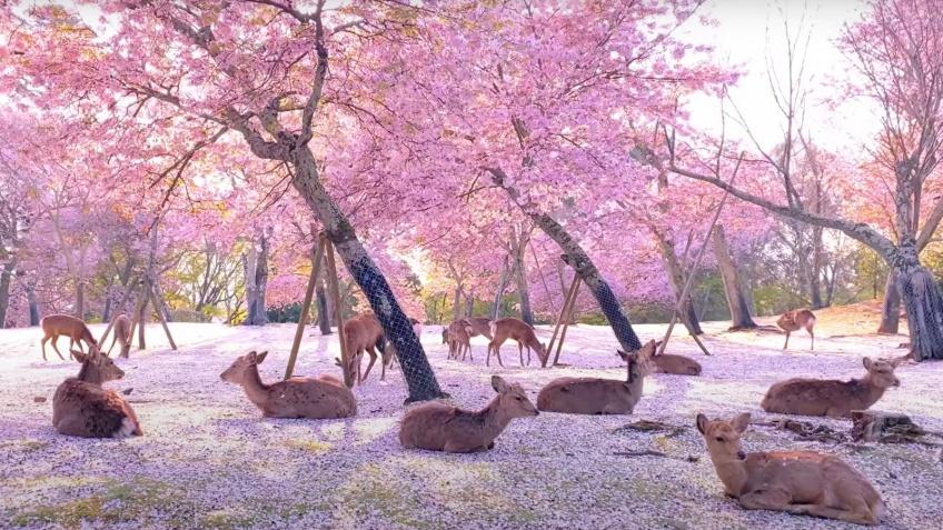 L'image la plus cute de cette année nous arrive tout droit du Japon !