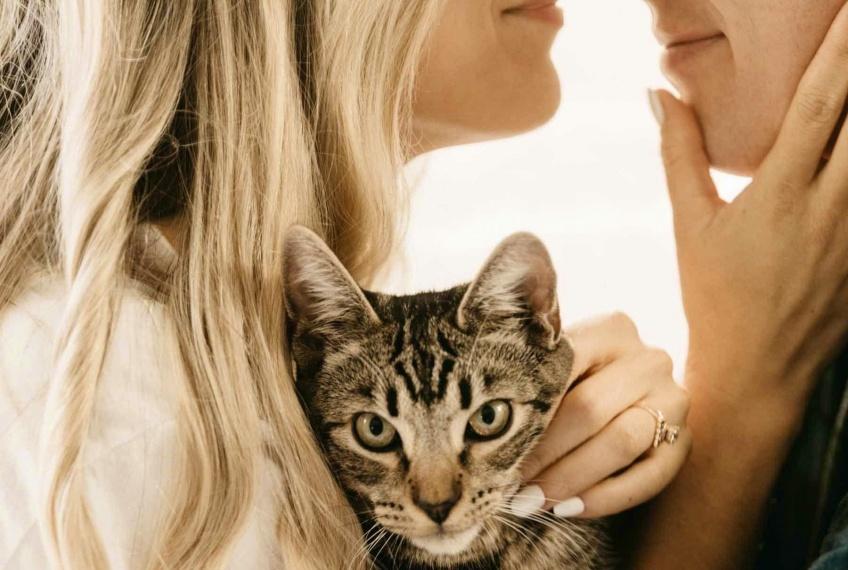 Sexo : les propriétaires de chats auraient une vie sexuelle plus épanouie !