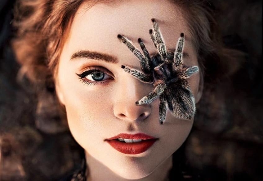 Rêver d'araignée : les différentes significations !