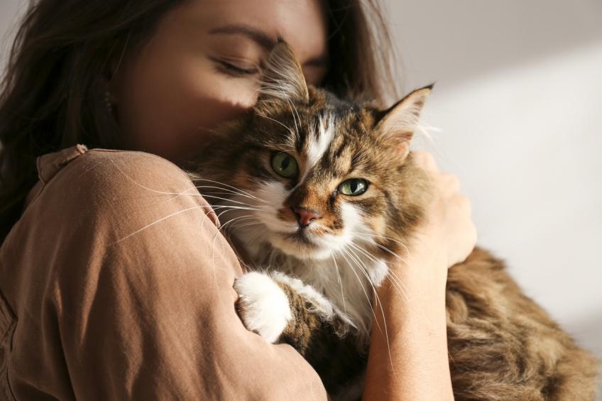 Les chats développeraient les mêmes traits de caractère que leur maître, selon cette étude !