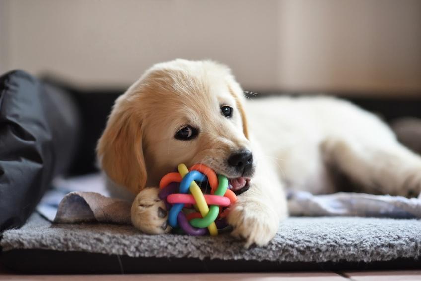 Animaux : adoptez et sauvez ces chiens, chats, chevaux, etc. de l'euthanasie !