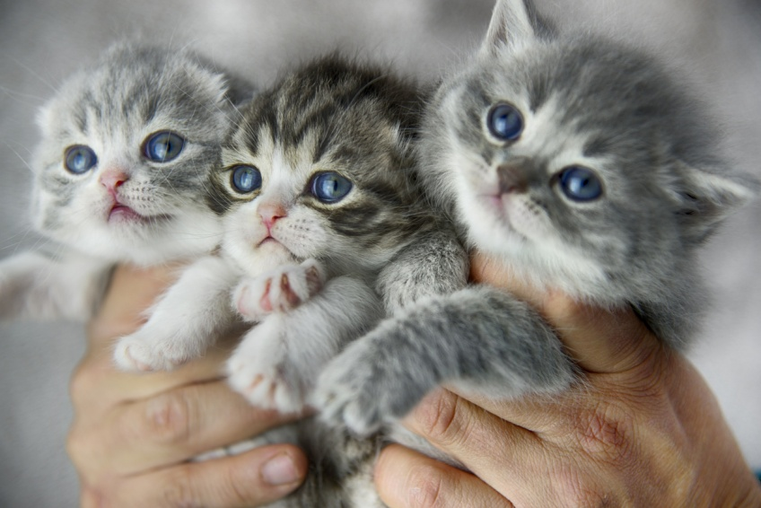 'Stérilisez vos animaux', le coup de gueule d'un vétérinaire obligé d'euthanasier des chatons