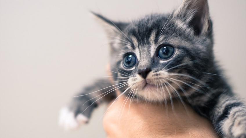 Animaux : '40 % des chats sont euthanasiés' sans raison médicale alerte la SPA