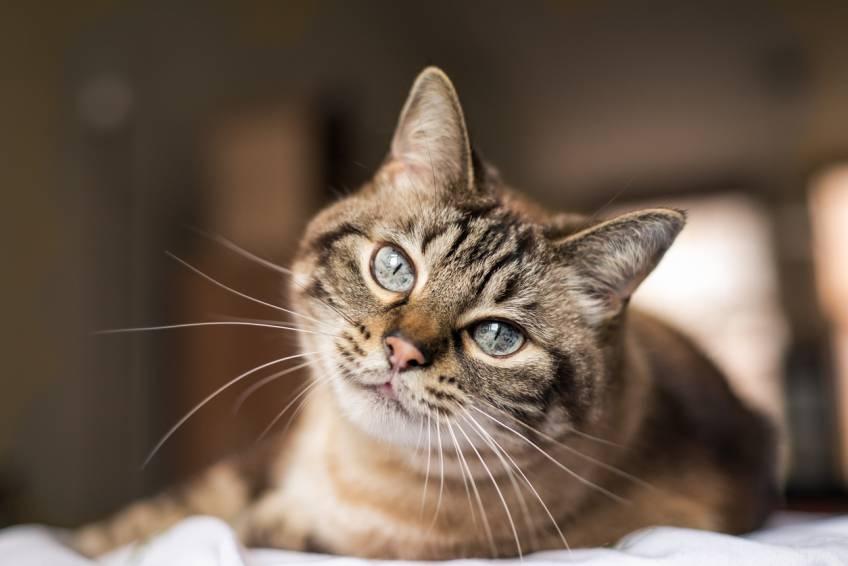 Visionner des vidéos de chats serait excellent pour la santé !
