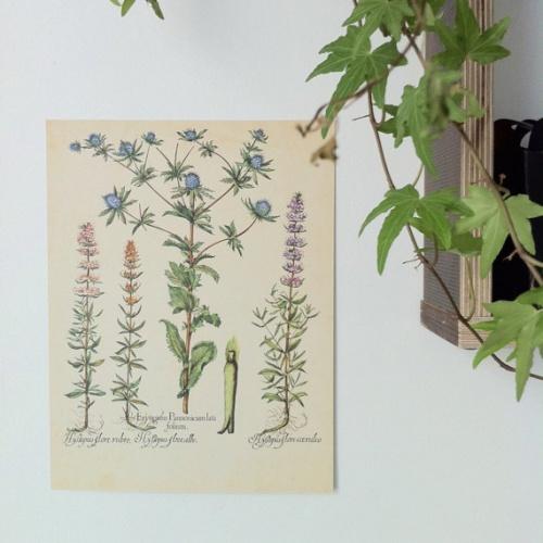 Papeterie de Paris - Affiche botanique