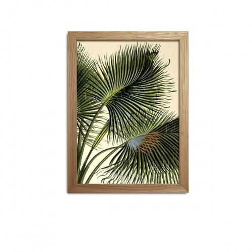 Fleux - Affiche palmier