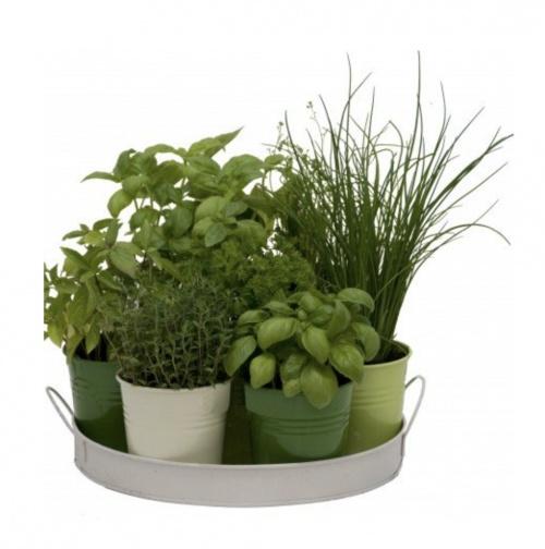 Florex - 7 Herbes aromatiques