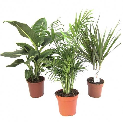 Amazon.de Pflanzenservice - Mélange de plantes