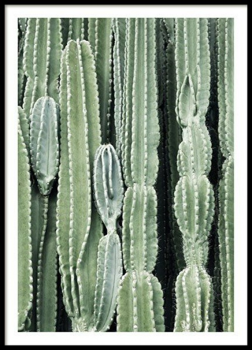 Desenio - Affiche cactus